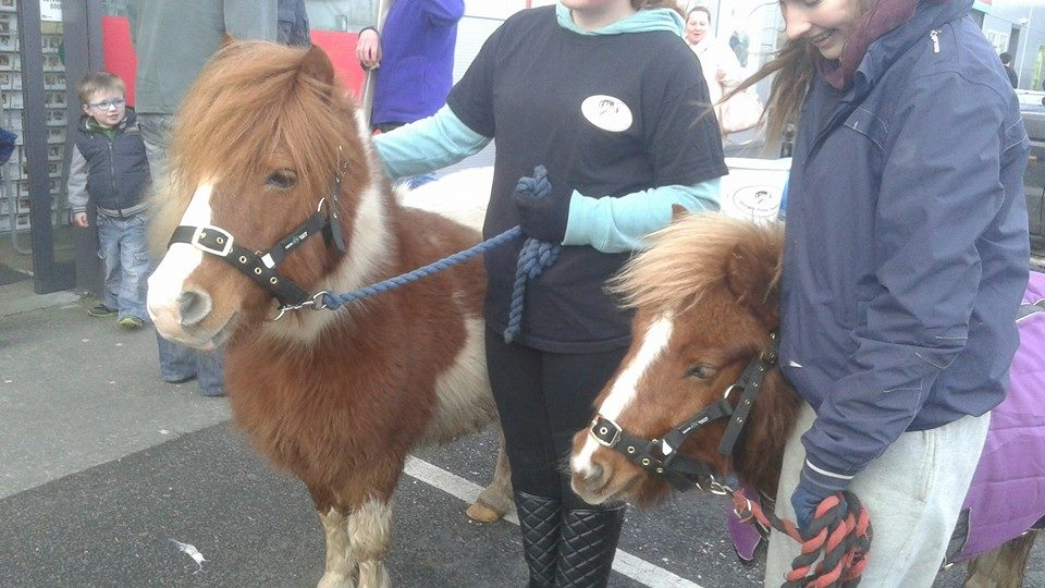 Ponies enjoying the attention!