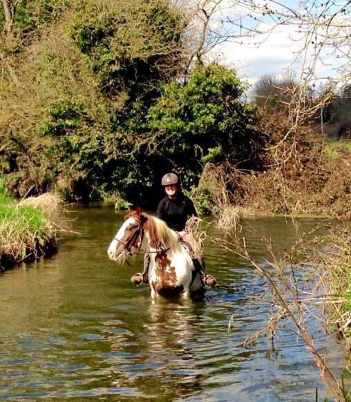 Happy Horse in Water