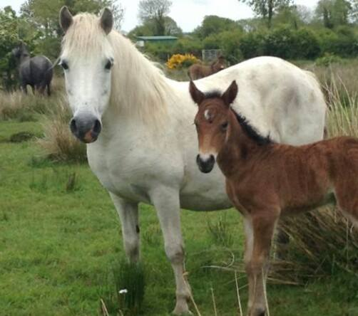 Newborn Foal and Mare
