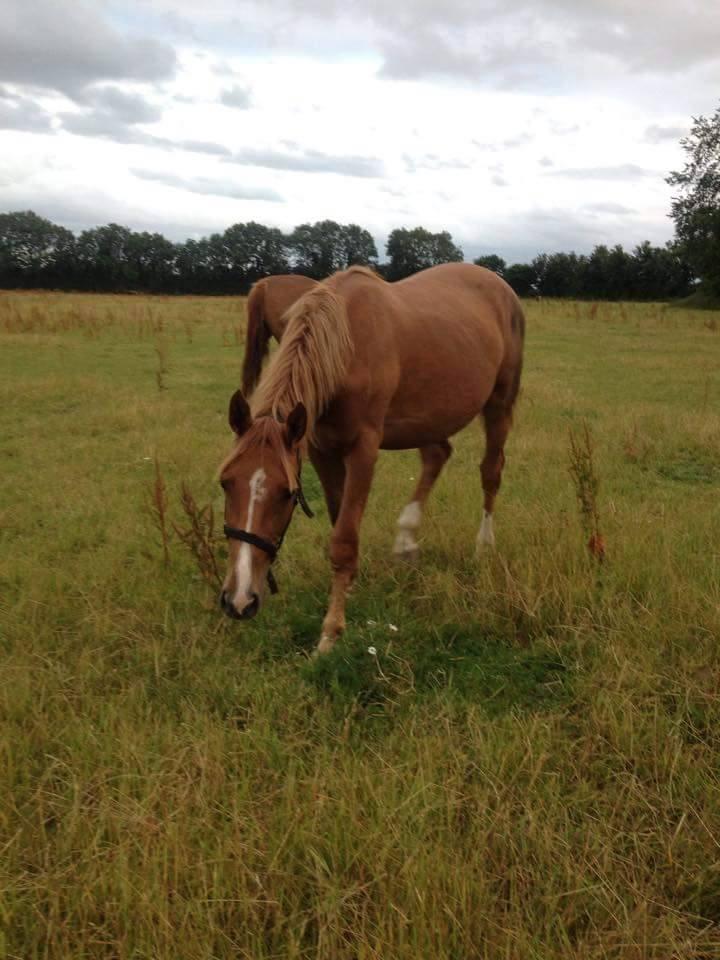 Healthy Horse in Field