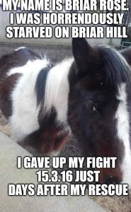 Neglected Horse