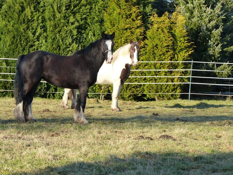 Best friedns horses