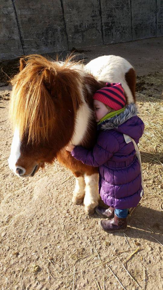 A Little girl hugs her small pony