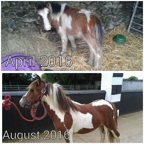 Marley Pony Before and After
