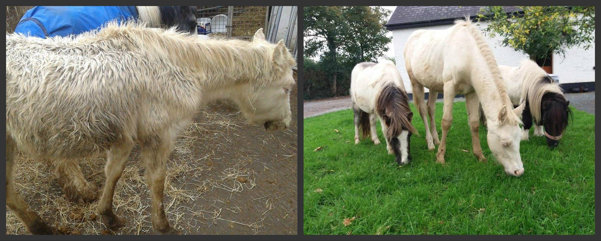 Before and After Horse