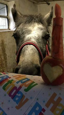 Horse's Birthday Carrot
