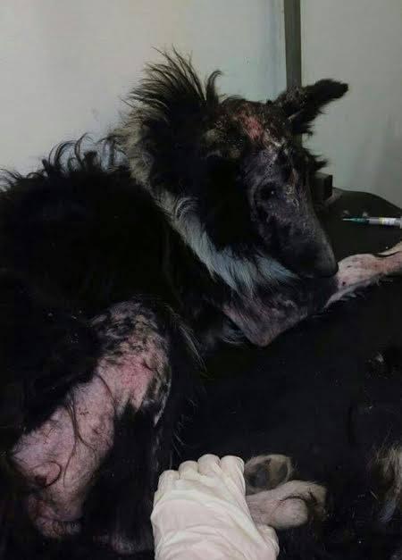 Dog losing hair