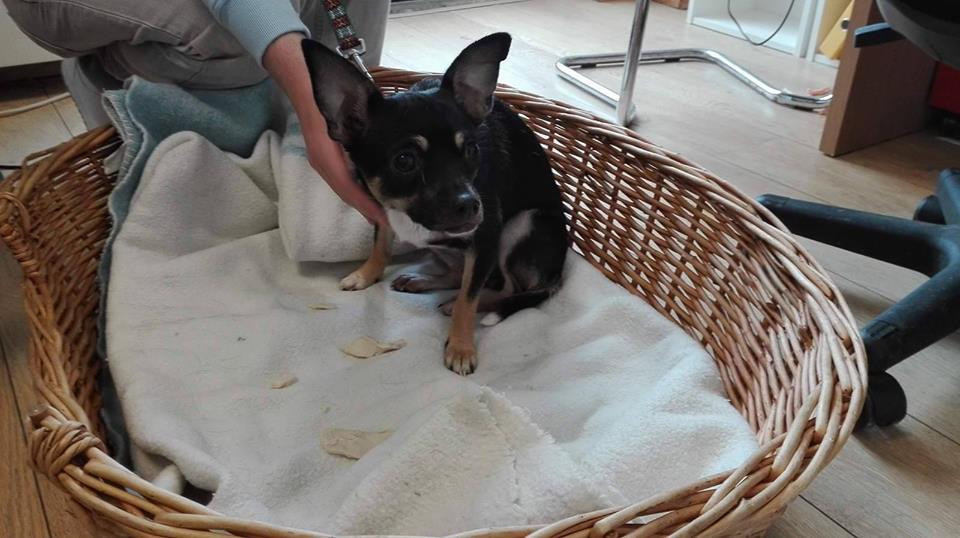Rescue dog aisha