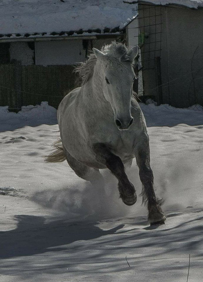 HHO Isadora enjoying life in her new home in Germany. We're so proud of her