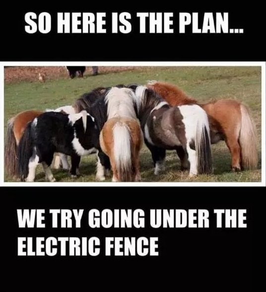 These horses have big plans