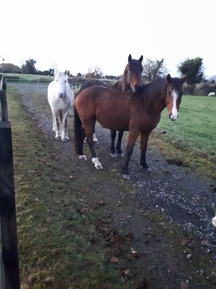 These horses are stray.   Please share