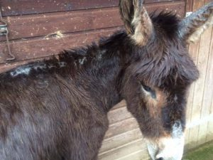 Abused Donkey 6